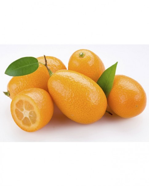 Lemon Kumkuat