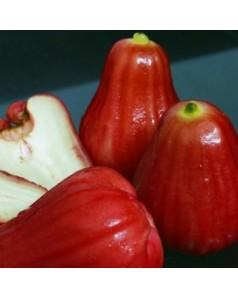 Water apple (chamba)