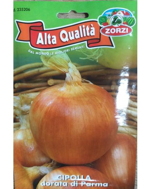 Onion Seed-Cipolla