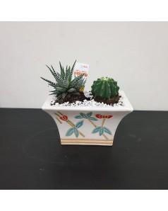 Cactus Arrangement
