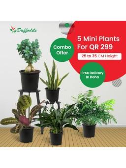 online plant nursery doha, qatar