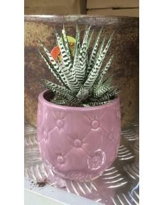 Cactus in ceramic pot