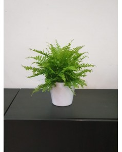 Fern in Ceramic Pot. 28 cm height.