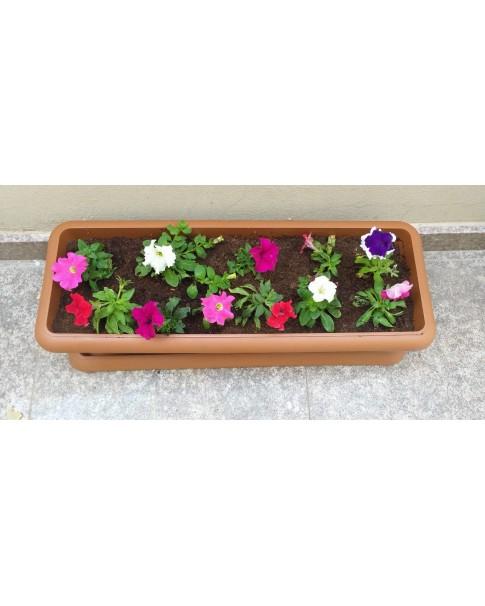 Petunia in Rectangle Plastic Pot