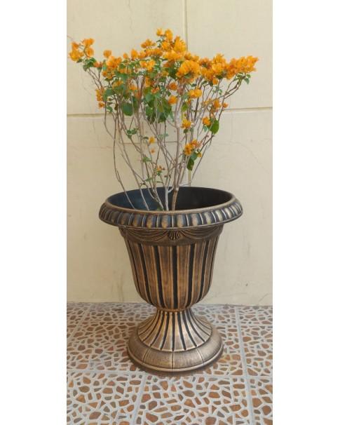 Bougainvillea Gold in Plastic Pot