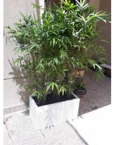 Bamboos in Ceramic Rectangle Pot