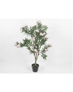 Oleander 60- 70 CM Height