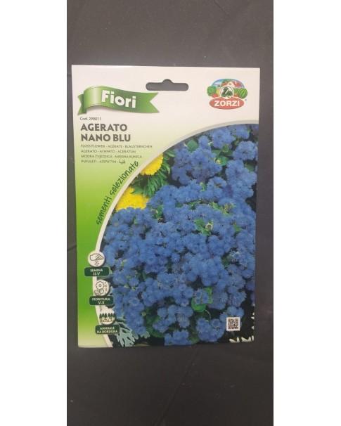 agerato nano blu (floss flower)