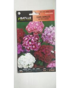 Clavel Ramillete  - Dianthus Barbatus