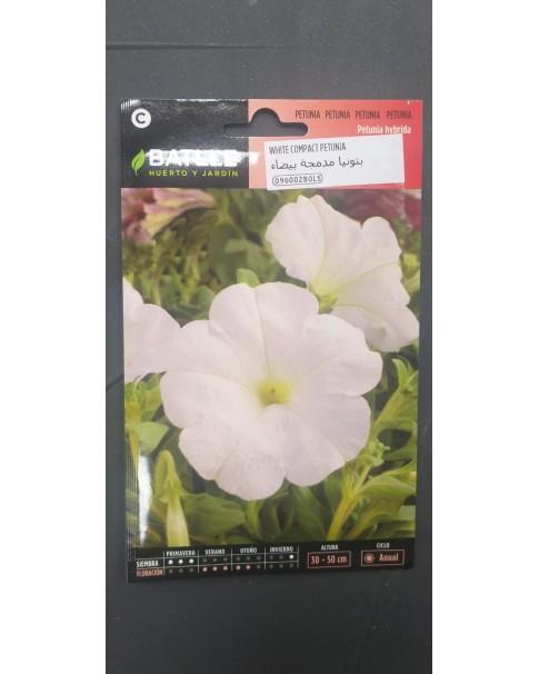 White Compact Petunia