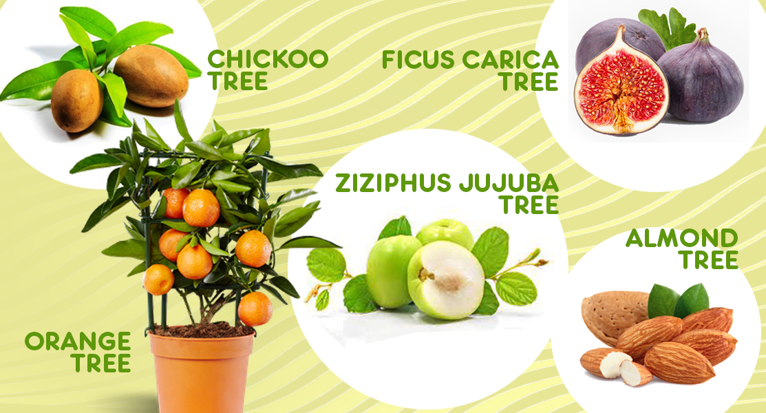 Fruit Trees Qatar