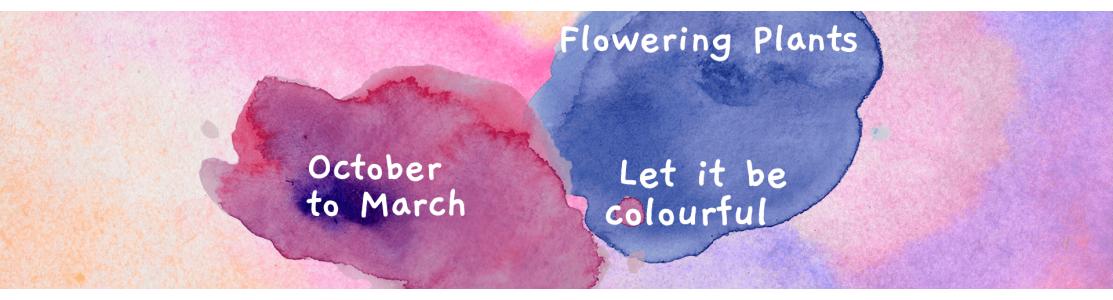 Flowering Plants - Outdoor