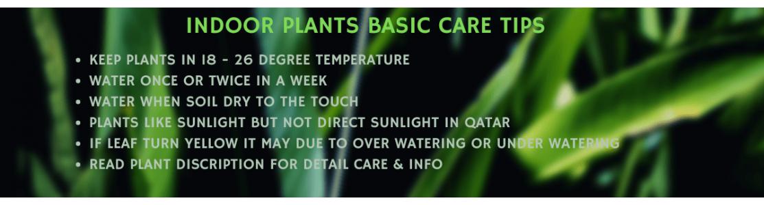 Indoor Plants - Premium