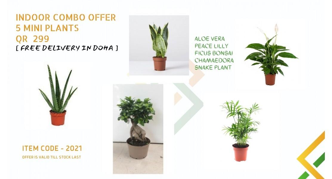 plant nursery in doha, qatar