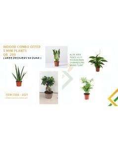 COMBO OFFER - 5 MINI PLANTS -CODE - 2021